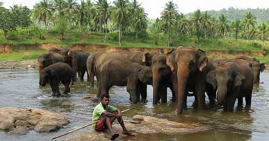 Godmodige elefanter ved elvebredden